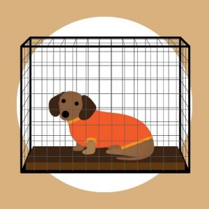 Crate dog