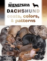 Dachshund coats colours patterns