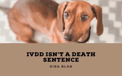 IVDD is not a death sentence