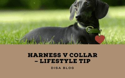 Lifestyle Tip – Harness versus Collar has been long debated