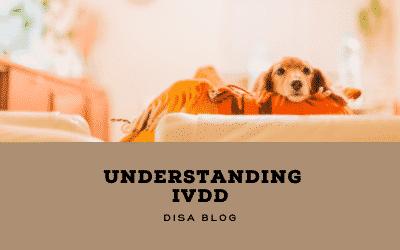 understanding ivdd