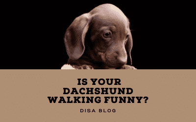 Is your hound walking funny?